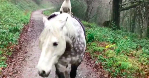 Cat Bonded With Horse ,riding on horseback in a forest