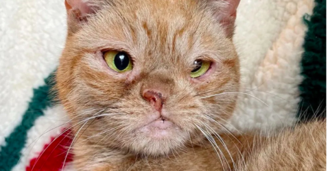 Cat With One Nostril